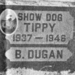 Show Dog Tippy