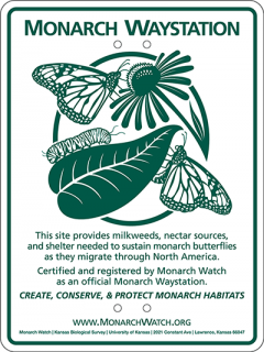 Green and white sign indicating a Monarch Waystation: This site provides milkweeds, nectar sources and shelter needed to sustain monarch butterflies as they migrate through North America.
