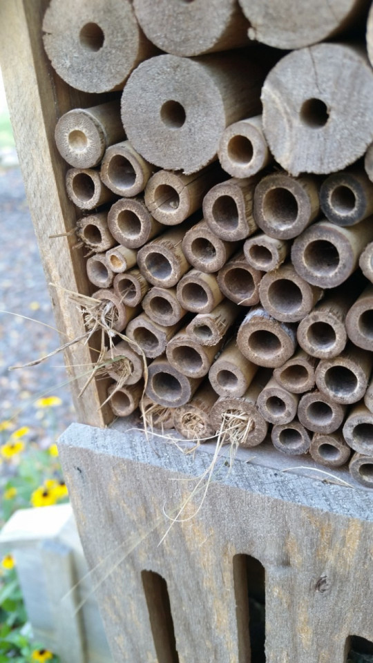 Photo of a bug hotel with grass sticking out of some of the openings.