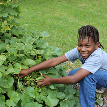 A young boy proudly showing garden plants.